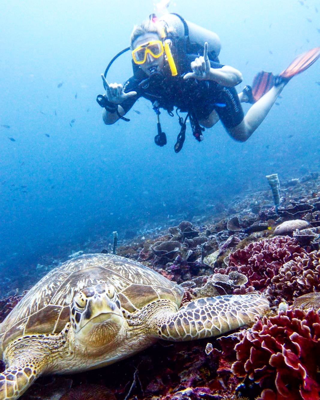 Amed, Bali: Diving With EcoDive
