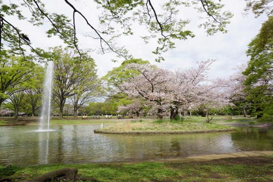Yoyogi Park is the perfect place to have a picnic or take a stroll in Tokyo, Japan!