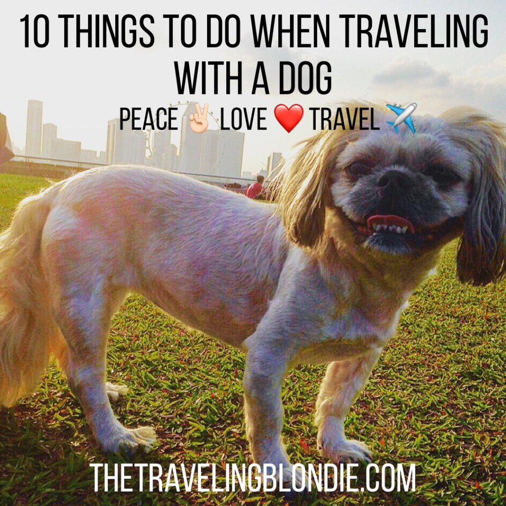 10 Things To Do When Traveling With A Dog